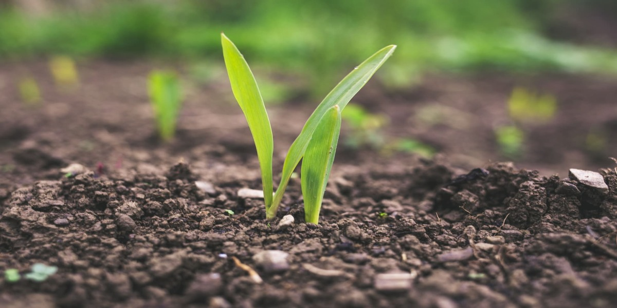 India Urea Market Outlook For Next 10 Years