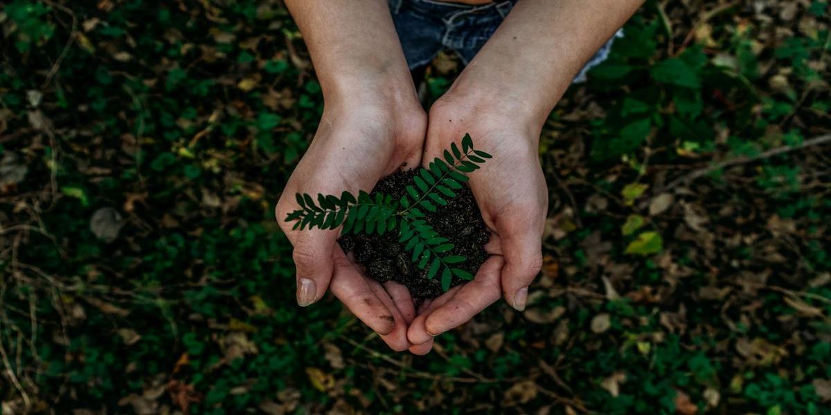 Renewable Energy Leads Sustainable Development Investment