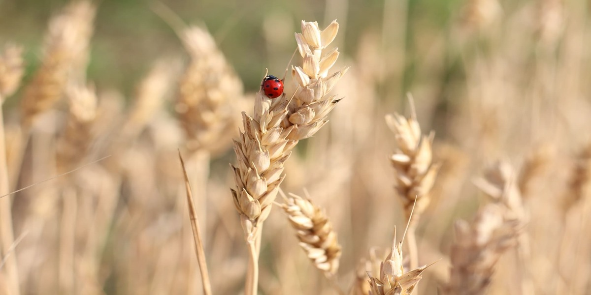 Insects: A Nightmare Of Every Farmer